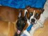 kineytte3 - éleveur canin Dogzer