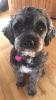 hesquartz - éleveur canin Dogzer