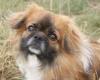 soleil172 - éleveur canin Dogzer