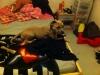 JayaStaff - éleveur canin Dogzer