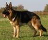 emilie.vermorel1 - éleveur canin Dogzer