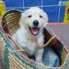 DogzerJulie - éleveur canin Dogzer