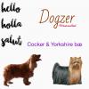 VivianneArel - éleveur canin Dogzer