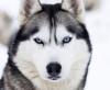 Domea - éleveur canin Dogzer