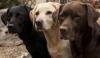 princesse_meika - éleveur canin Dogzer