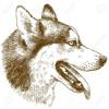 Pim.s - éleveur canin Dogzer