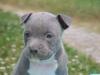 Laurel95 - éleveur canin Dogzer