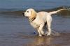 eleo127 - éleveur canin Dogzer