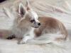 Dada603 - éleveur canin Dogzer