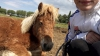 yehowahh2 - éleveur canin Dogzer