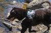 GusEtDaphney - éleveur canin Dogzer