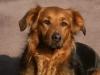 Ysoline3 - éleveur canin Dogzer