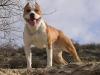 jougnota7 - éleveur canin Dogzer