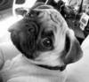 Gna77 - éleveur canin Dogzer