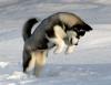 PatPatto - éleveur canin Dogzer