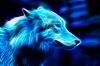 Louve_Bleue - éleveur canin Dogzer