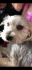 Hanaa3 - éleveur canin Dogzer