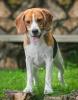 LounaLove46 - éleveur canin Dogzer
