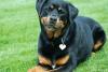 Lili2222222 - éleveur canin Dogzer