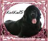 KotKa15 - éleveur canin Dogzer