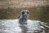 Varzay - éleveur canin Dogzer