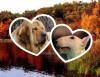 godzilla2008 - éleveur canin Dogzer