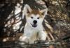 pokemon1245 - éleveur canin Dogzer