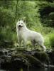 aigly - éleveur canin Dogzer