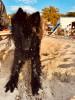 Papach - éleveur canin Dogzer