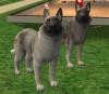 Aweil033 - éleveur canin Dogzer