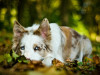 kassy77122007 - éleveur canin Dogzer