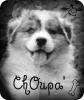 Xx-chOupa-chOups-xX - éleveur canin Dogzer