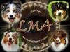 maelice - éleveur canin Dogzer