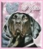 pifou06 - éleveur canin Dogzer