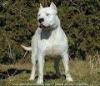 aymanewac - éleveur canin Dogzer