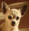 FramboiZzroZz - éleveur canin Dogzer
