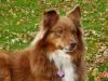 Chatonmimi2 - éleveur canin Dogzer