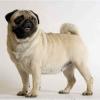 lavegetarienne - éleveur canin Dogzer