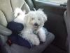 miel-pops2 - éleveur canin Dogzer