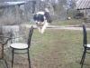 gipsy-ma-chienne - éleveur canin Dogzer