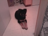 BEEBOUCHE - éleveur canin Dogzer