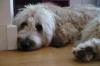 twiste13 - éleveur canin Dogzer