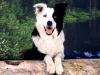 didine1978 - éleveur canin Dogzer