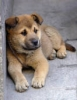 choco59 - éleveur canin Dogzer