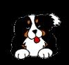 quinine - éleveur canin Dogzer