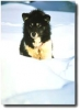 HDJR - éleveur canin Dogzer