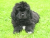 titoff54 - éleveur canin Dogzer