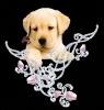 carlton - éleveur canin Dogzer