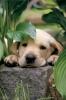 Chechej. - éleveur canin Dogzer