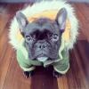 TESSY4 - éleveur canin Dogzer